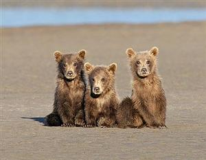 Inquisitive Cubs