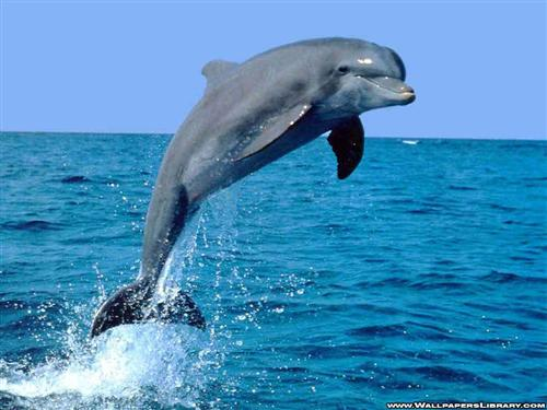 I love Dolphins